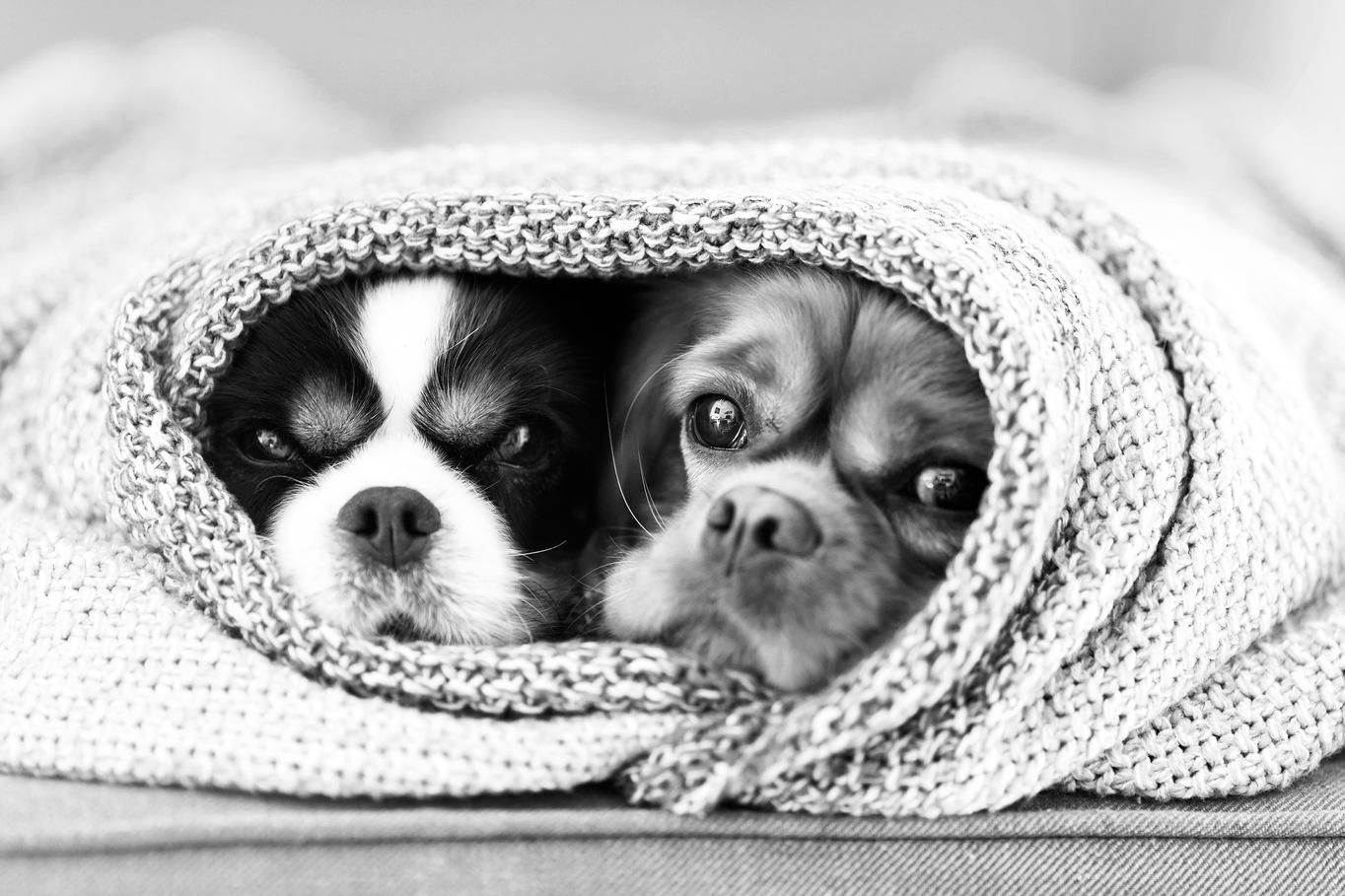 cabinet vétérinaire Châtelain Vet - ixelles, bruxelles, chiens, chats et animaux domestiques