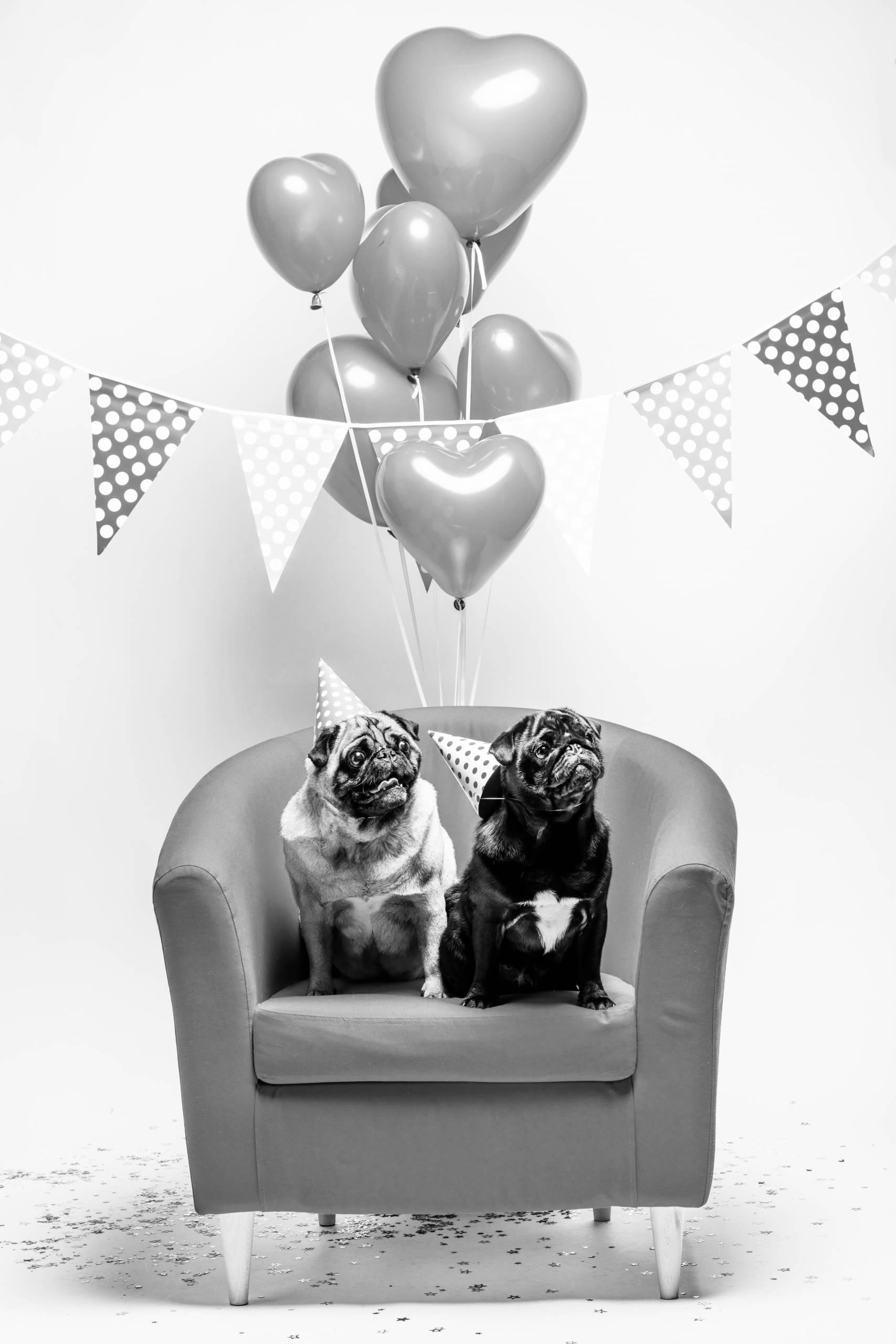 cabinet vétérinaire ChatelainVet - ixelles, bruxelles, chiens, chats et animaux domestiques